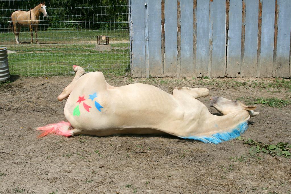 Horse Hair Dye Fun Colors My Horse Forum