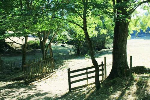 dappled valley