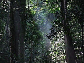 Mpenga Forest Reserve - 14