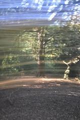 Favourite tree (phillios) Tags: tree suttonpark