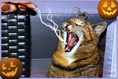 Ha jamjam finger!!! Happy Halloween (LETHO 2706) Tags: halloween cat yawn katze picnik gähnen bysäne ashowoff painnameofthecat