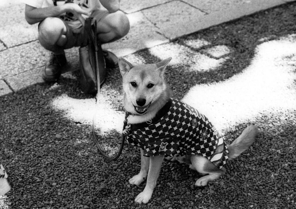 MATSURI dogg