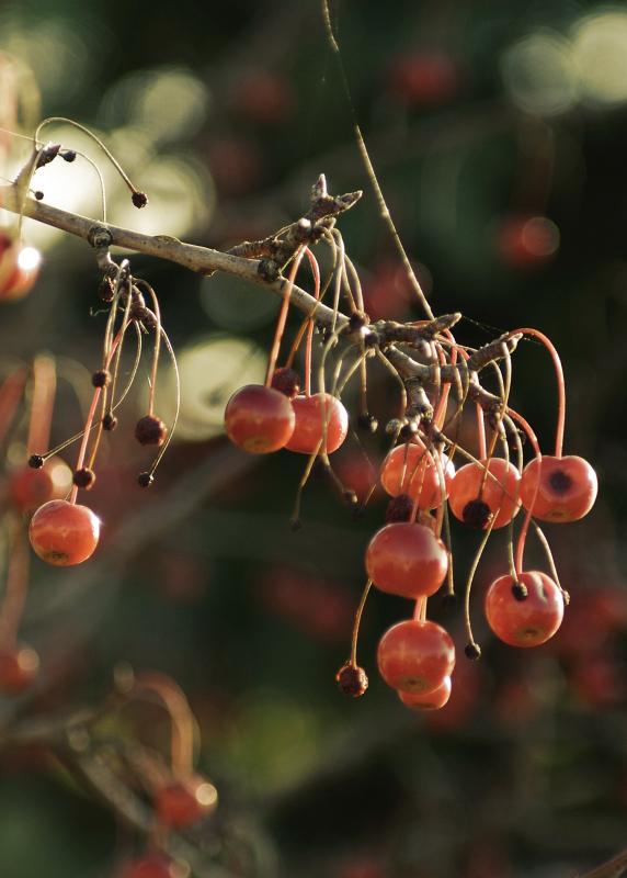 Vintage Berries?