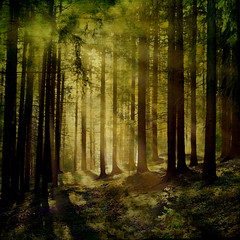 Hagrids forest (regina_austria) Tags: wood trees light nature forest distillery bellissima highquality naturesfinest blueribbonwinner coth photografia 100faves 50faves imagepoetry mywinners abigfave diamondheart visiongroup flickraward ysplix freenature theunforgettablepictures reginaaustria platinumheartaward wonderfulworldmix theperfectphotographer flickrestrellas peaceawards vangram grouptripod lesamisdupetitprince artofimages updatecollection bestcapturesaoi bestofmywinners sunbeaums