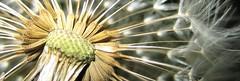 pusteblumenah (torsten hansen (berlin)) Tags: light colour macro building berlin night insect landscape licht moving orchids nacht balticsea berge bewegung beatle makro rgen hansen landschaft farbe ostsee ruegen gebude nahaufnahme insekten kfer klettern torsten huser orchideen augenblick klettersteig dolomiten stllleben