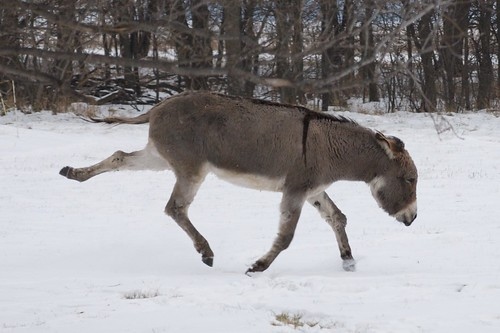 Get Fit From a Donkey Kick – A Healthier Michigan