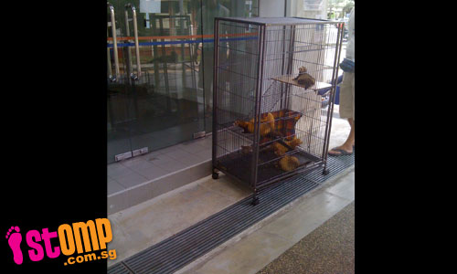 Wild animals found at police post: Someone must have kept them illegally