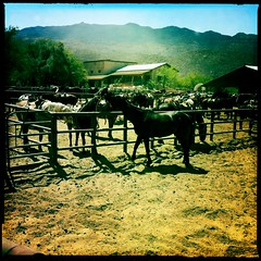 Tanque Verde Guest Ranch 01 by Jason Willis