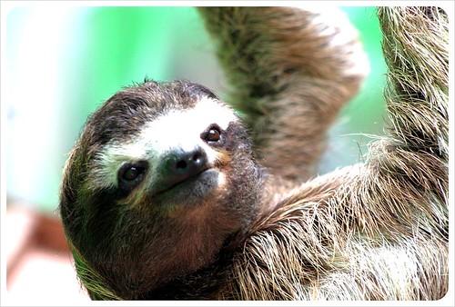 sloth sanctuary Monteverde Costa Rica