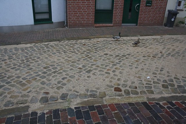 Ducks in Lüneburg