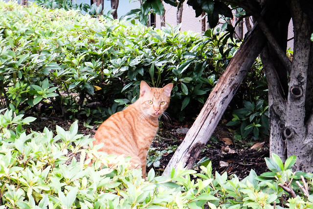 Today's Cat@2011-06-19