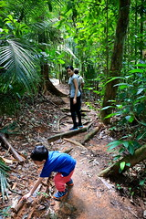 Royal Belum Rainforest (Phalinn Ooi) Tags: belumrainforestresort royalbelum gerik perak malaysia asia malaysian rainforest jungle hutan hujan tropika biodiversity nature adventure scenery outdoor landscape beautiful view alam semulajadi biology life flora fauna plants saltlick trekking hiking lake tasik temenggor banding island pulau sungai river waterfall airterjun orangasli jahai boat wild resort hotel wanderlust tourism tour travel jalan cuti holiday explore relax bokeh canon people camera photography eos dslr 5dm4 family wife son pretty love sexy stunning trump melania kimjongnam deuter