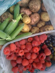 Late June Pickings