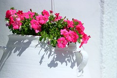 Pot and flowers (Marite2007) Tags: pink flowers plants white floral beautiful closeup outdoors greek islands colorful pretty blossom hellas greece pots ornament clay lovely whitewashed ellada naturesfinest beautifulphoto beautyunnoticed awesomeblossoms