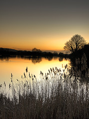 At Days End (gracust) Tags: trees sunset water reflections reeds landscape golden chilterns scenic reservoir tring hertfordshire daysend aplusphoto naturewatcher