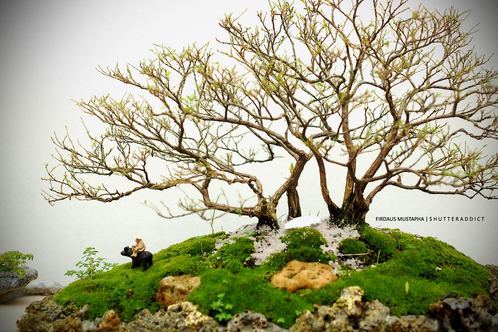 orkid-lah4