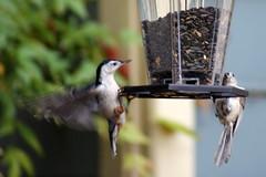 part feeder