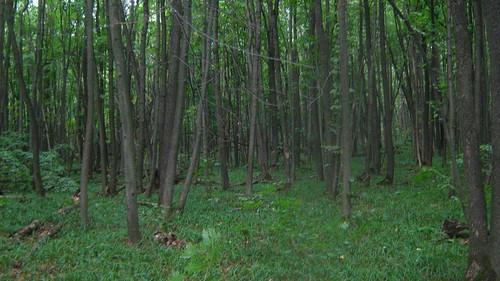 3830137541 1325790f6c Тайны леса надевятом километре