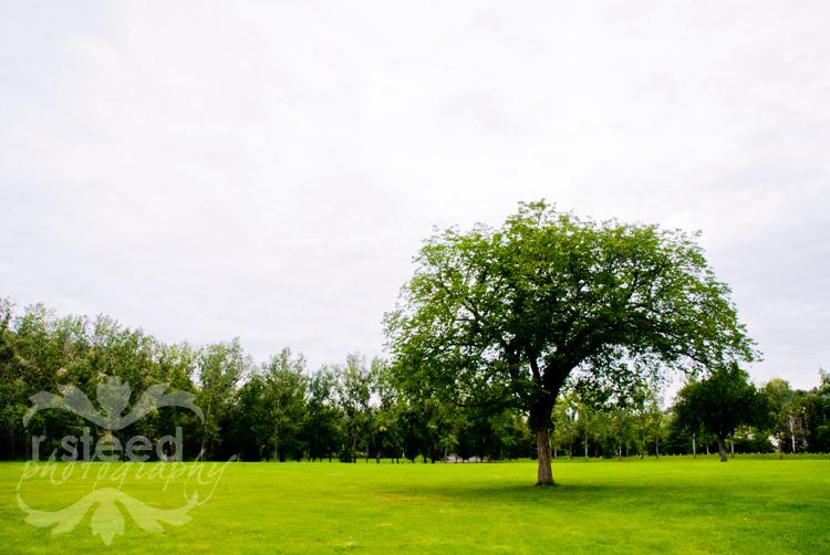DSC_0002tree