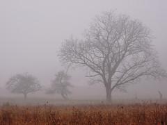 Foggy Dawn (Brian Stechschulte) Tags: mist tree fog landscape dawn samsung sleepingbeardunes nv7 samsungnv7