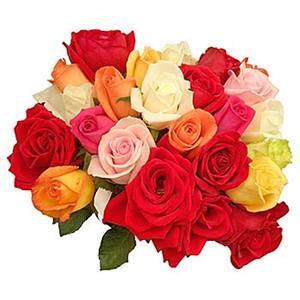 Mix Roses Abacoflowers.com