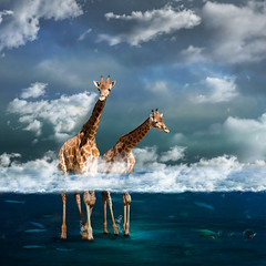 misty (Martine Roch) Tags: ocean blue sea cloud fish animal square dream surreal imagination surrealist giraffe manray petitechose martineroch artistictreasurechest