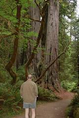 DSC_3614 (amie_toole) Tags: oregeon redwoodnationalpark