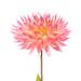 Blüte mit Regentropfen (High-Key)