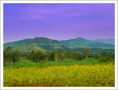 Sahyadri Magic (Prashhant) Tags: flowers trees sky grass clouds hill monsoon pune sahyadri bhor