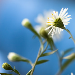 naa, naa-naa, na-na-na-naaaaaaaaa... na-na-na-naaaaaaaaa.... hey jude.... (harold.lloyd) Tags: blue flower yellow dof bokeh bluesky daisy stalk kinda lotsofblue daisery guesstheblueandwinaprize notethereisnoprize blueanyway