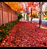 Path of Red (Chad Galloway Photo) Tags: street autumn trees red tree fall leaves photo colorado bokeh path sony picture denver sidewalk walkway fullframe dslr a850 bokehrama bokerama brenizermethod chadgalloway