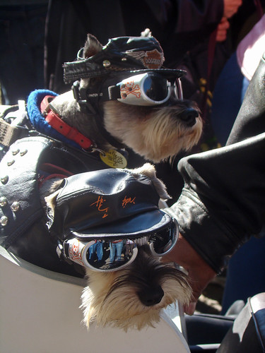 biker dogs by istolethetv, on Flickr