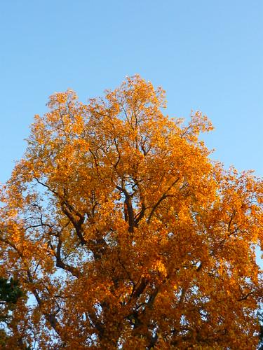 arbre orange