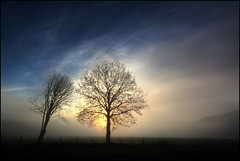 Listen (angus clyne) Tags: morning trees mist cold tree wet field fog sunrise fence dawn scotland leaf frost branch bare perthshire tay twig ash bud dunkeld rowan birnam flikcr silverside leefilters colorphotoaward