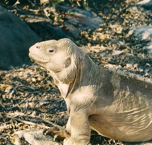 Galapagos-Santa Fe (1)