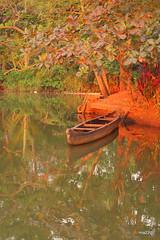 Ferry (Madhu B Nair) Tags: water ferry self boat sunsetlight arundhatiroy backwater driven kottayam goldenlight eveningsunlight godofsmallthings redsoil aymanam ayemenem madhubnair aimanam greenfreshwaterriver olassa