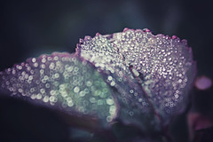 dropped leaf (Jasmin Bauer) Tags: madrid hoja leaf bokeh drop desenfoque gota blatt tropfen brillos elretiro glitzern enfoqueselectivo retofs1 blitzern