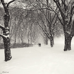 wintering (moggierocket) Tags: park trees winter bw white cold tree nature fairytale sn