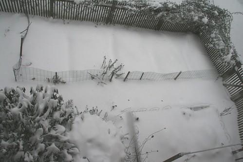 snowy 1