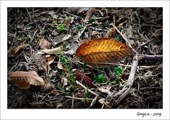 Una hoja seca (grego.es) Tags: parque autumn naturaleza sevilla andaluca sony otoo 2009 amate alpha700 wwwgregoes jpa008