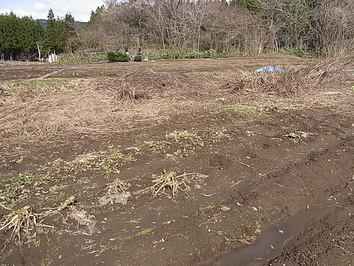 昨年の野菜の残渣