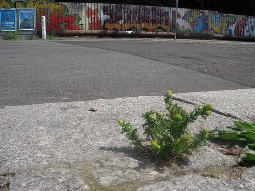 Die Großstadtpflanze (Claire Waldorif)