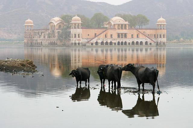 ephemeral and real.Rajasthan.Индия.India