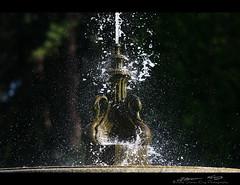 Duncan Garden Fountain (Steven King Photography) Tags: park usa water fountain statue gardens canon washington swan spokane king spray steven splash duncan manito