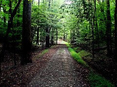 Coming into the light (bdaryle) Tags: statepark trees green nature outdoors path sony trail gravel umsteadstatepark brandondaryle bdaryle imagesbybrandon
