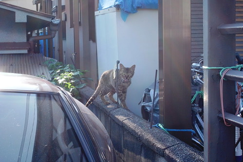 Today's Cat@20090731