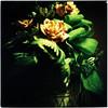 Rose rosse per te (ale2000) Tags: flowers roses black verde green 6x6 rose yellow mediumformat square holga xpro cross heart crossprocess fake giallo vase fiori process agfa cuore nero vaso rsxii falsi aledigangicom