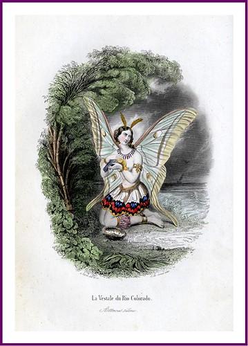 010-Les Papillons, métamorphoses terrestres des peuples de l'air- Pierre Amédée Varin