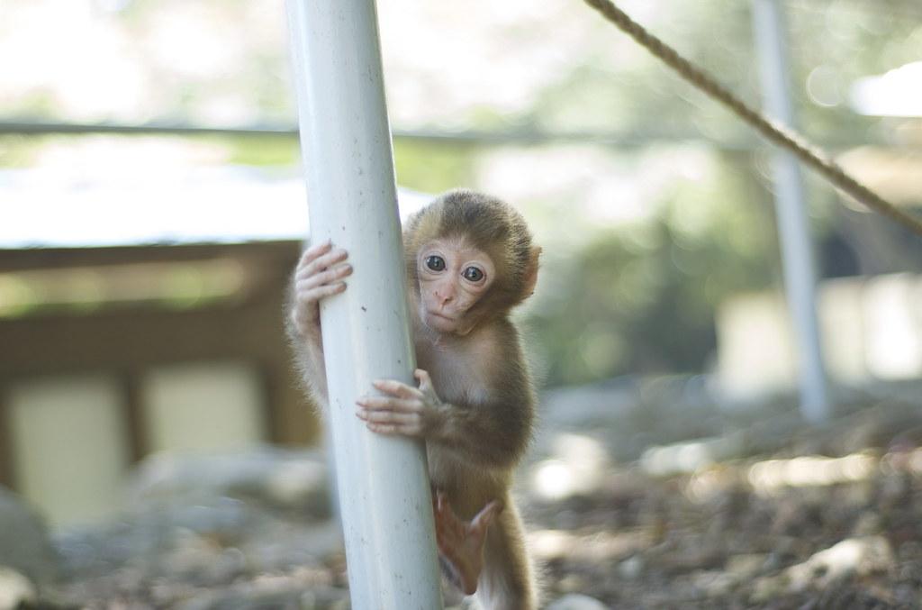monkey #15