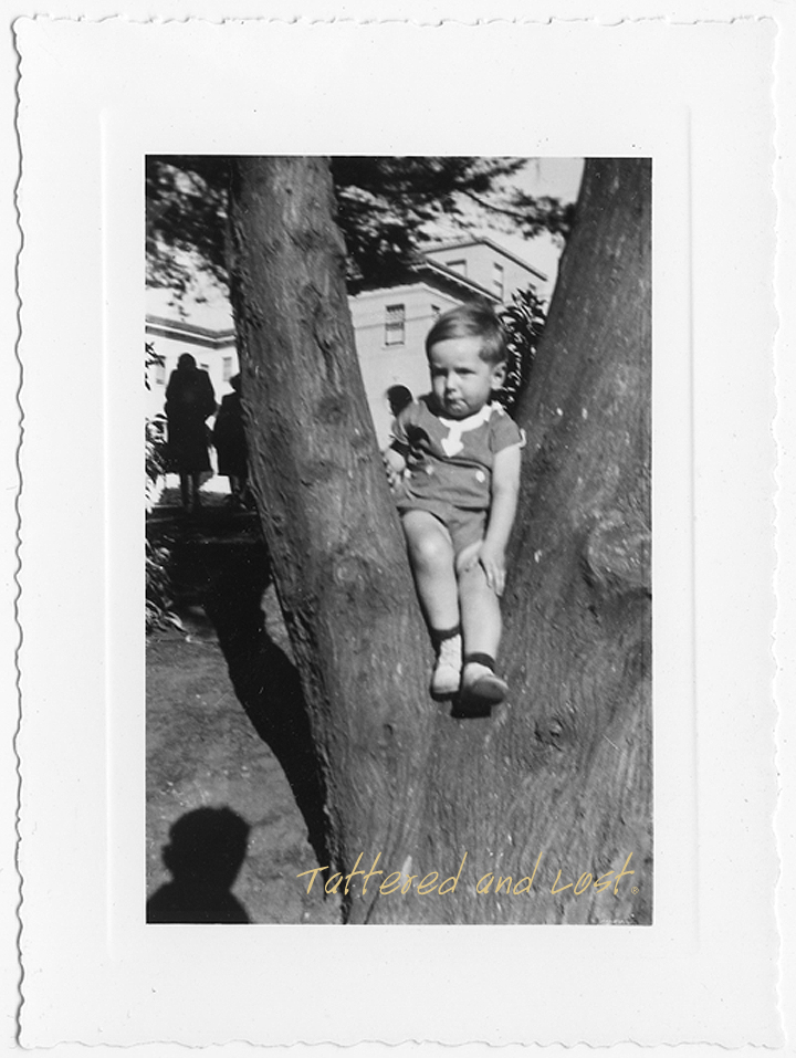 boy in a tree_tatteredandlost
